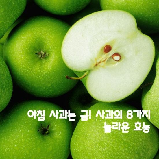아침 사과는 금! 사과의 8가지 놀라운 효능.jpg