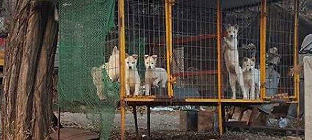 강아지 살려달라며 후원금 모아 사치