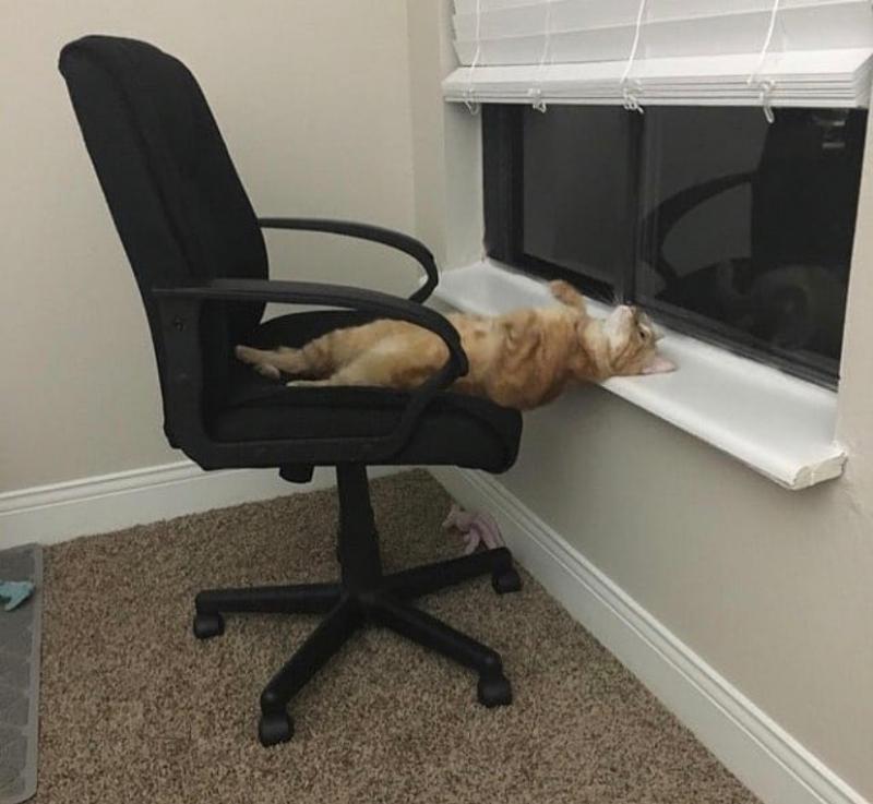 사무실에서 눕는 방법