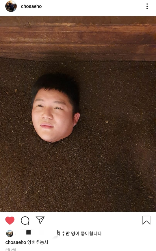 양배추 농사