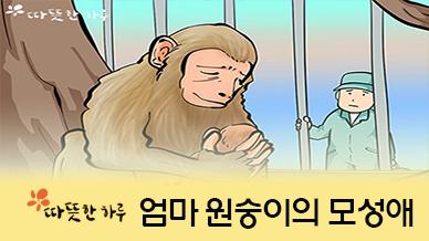 [따뜻한 웹툰] 엄마 원숭이의 모성애