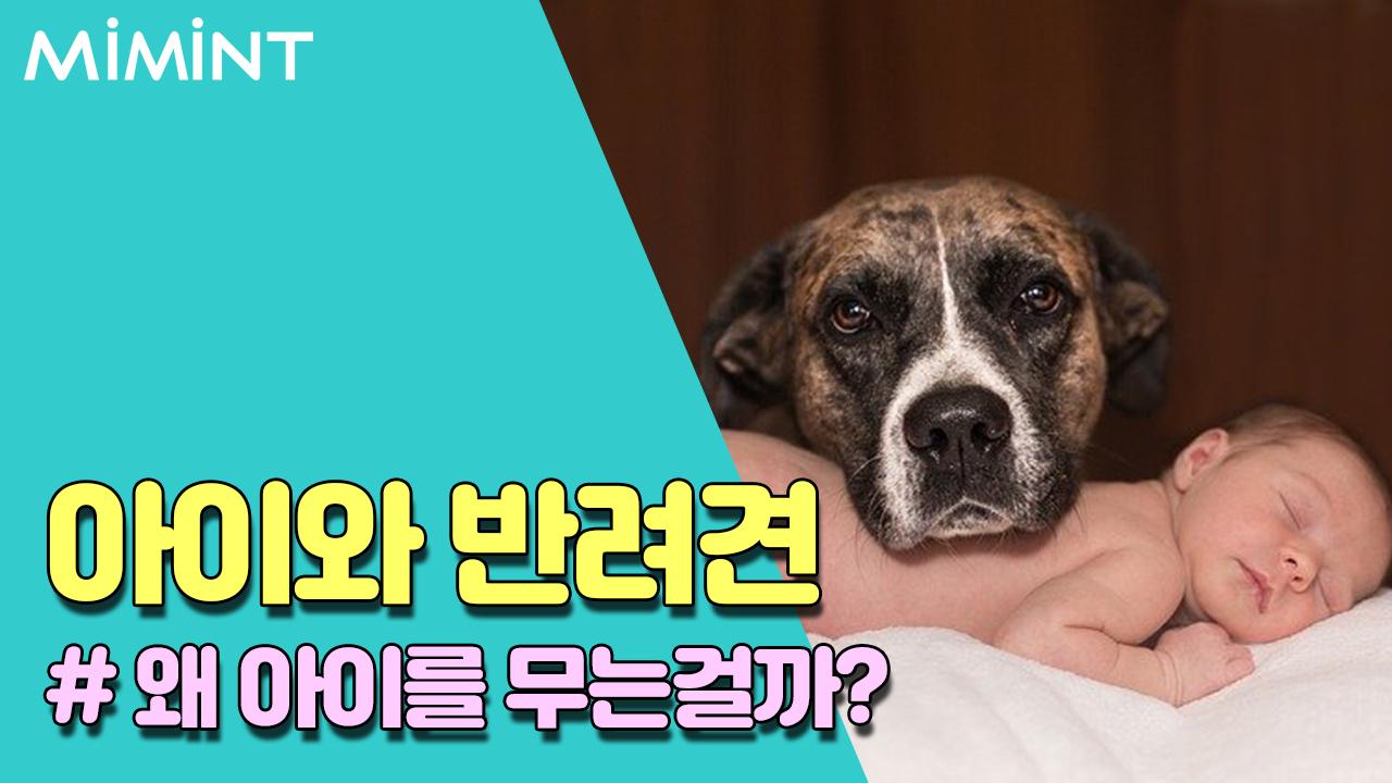 강아지들은 왜 아이를 무는걸까요?