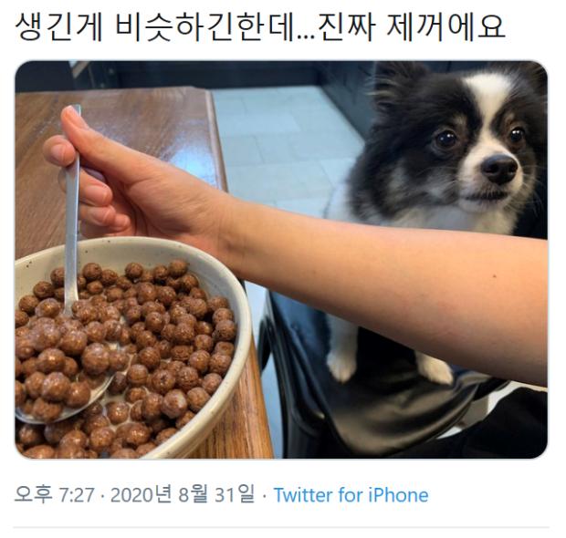 주인 의심하는 강아지