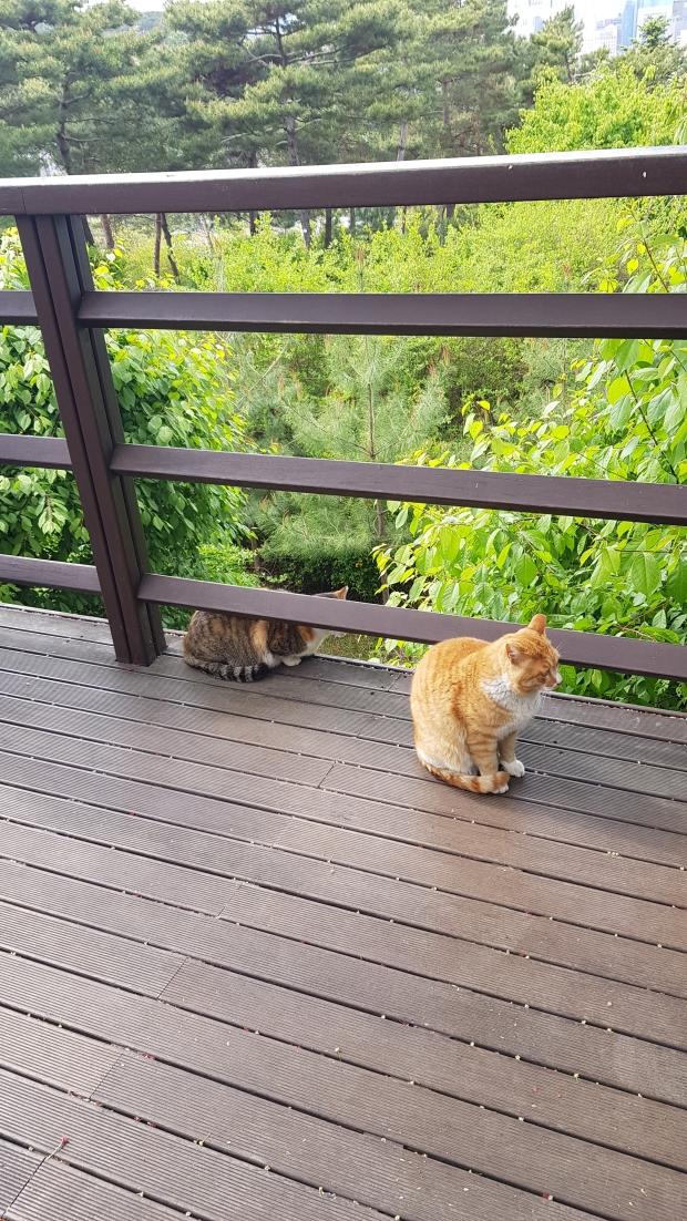 남산공원 길냥이들