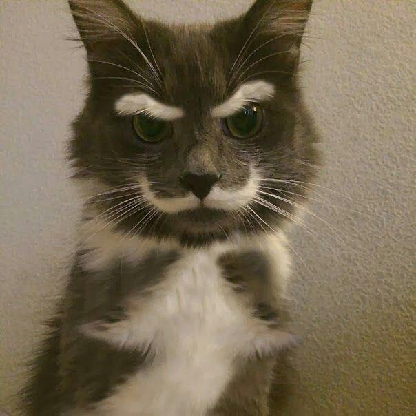 특이한 털색깔 고양이