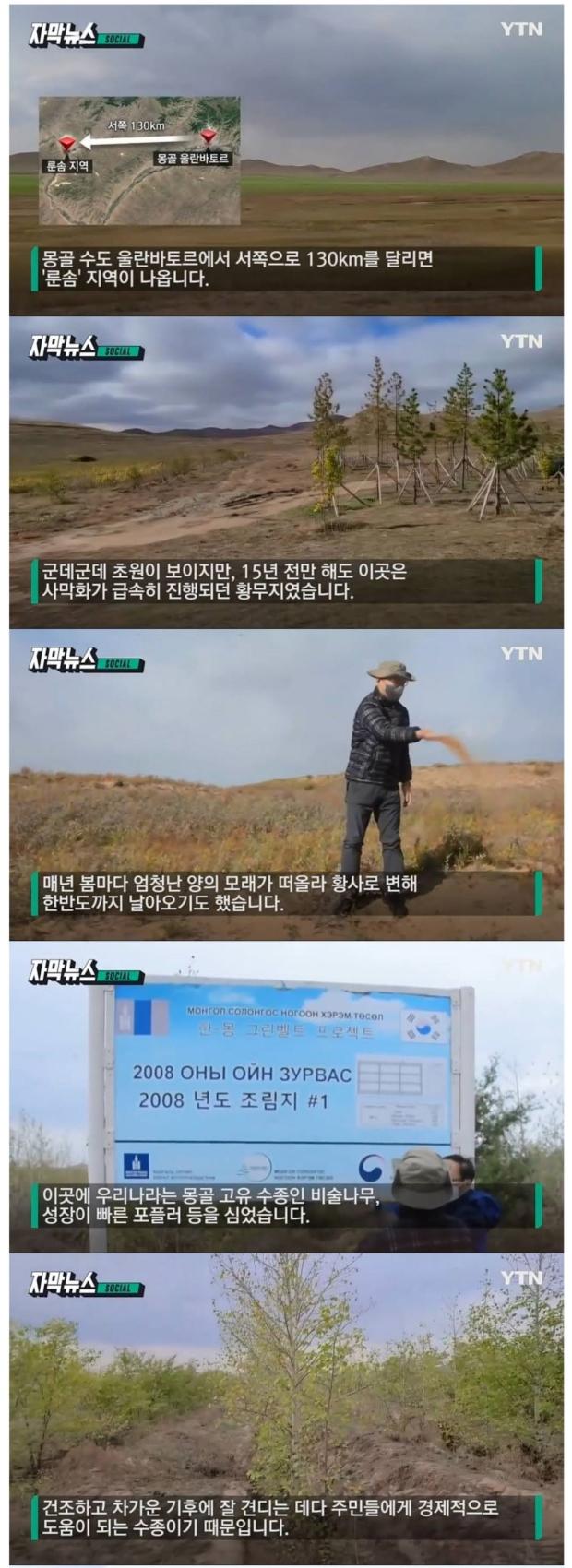 15년 전 몽골에 심은 나무들