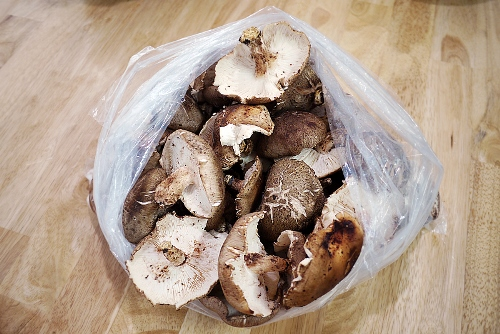 표고버섯밥.jpg