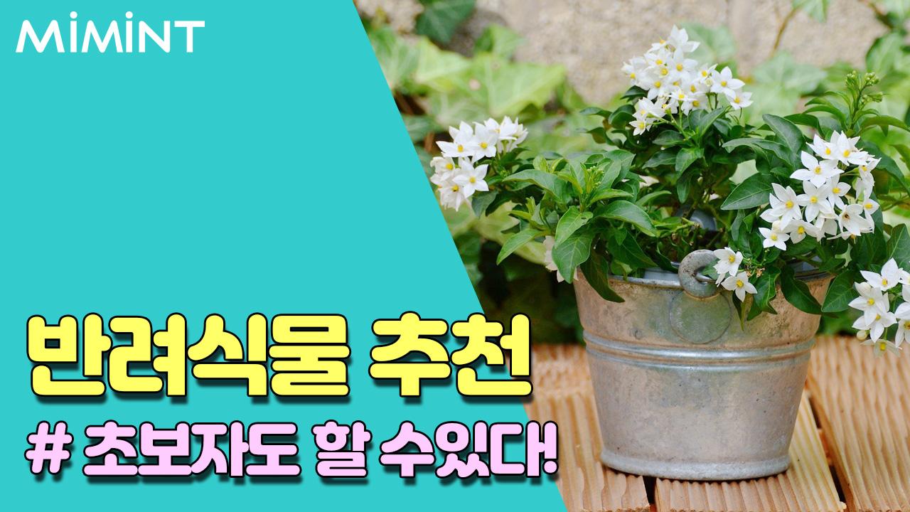 식물 타이틀.jpg