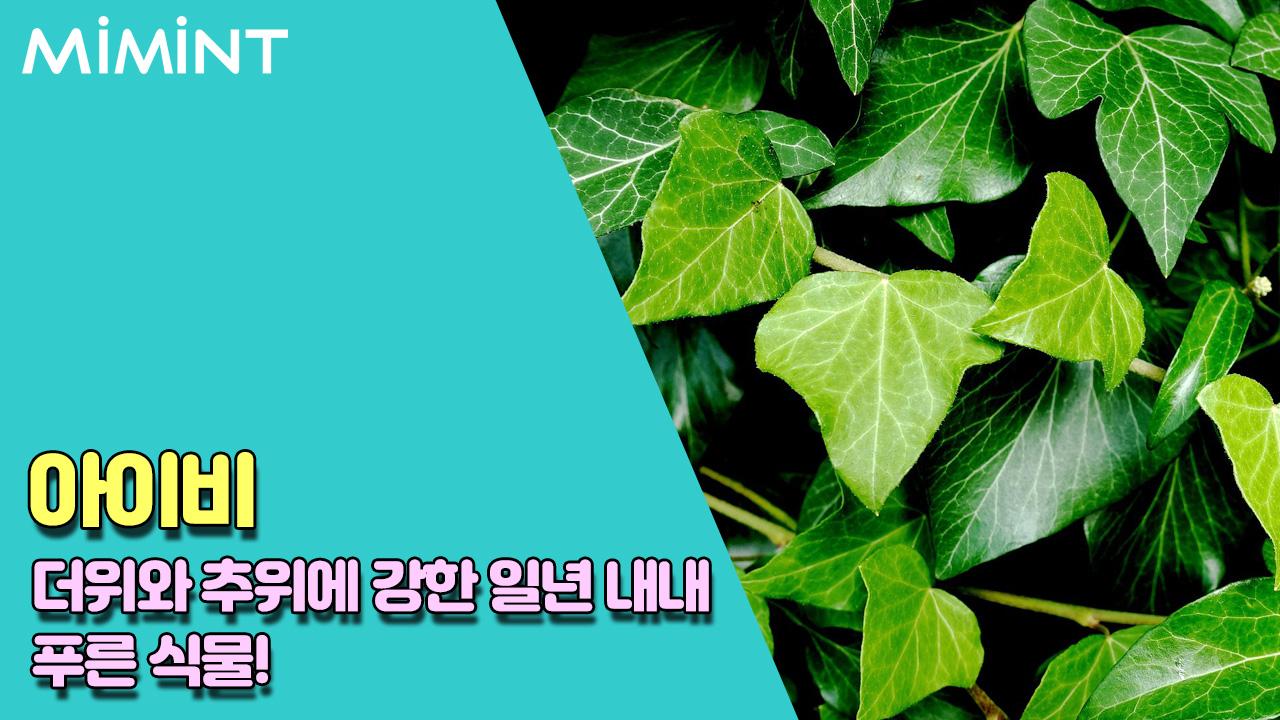 식물 3.jpg