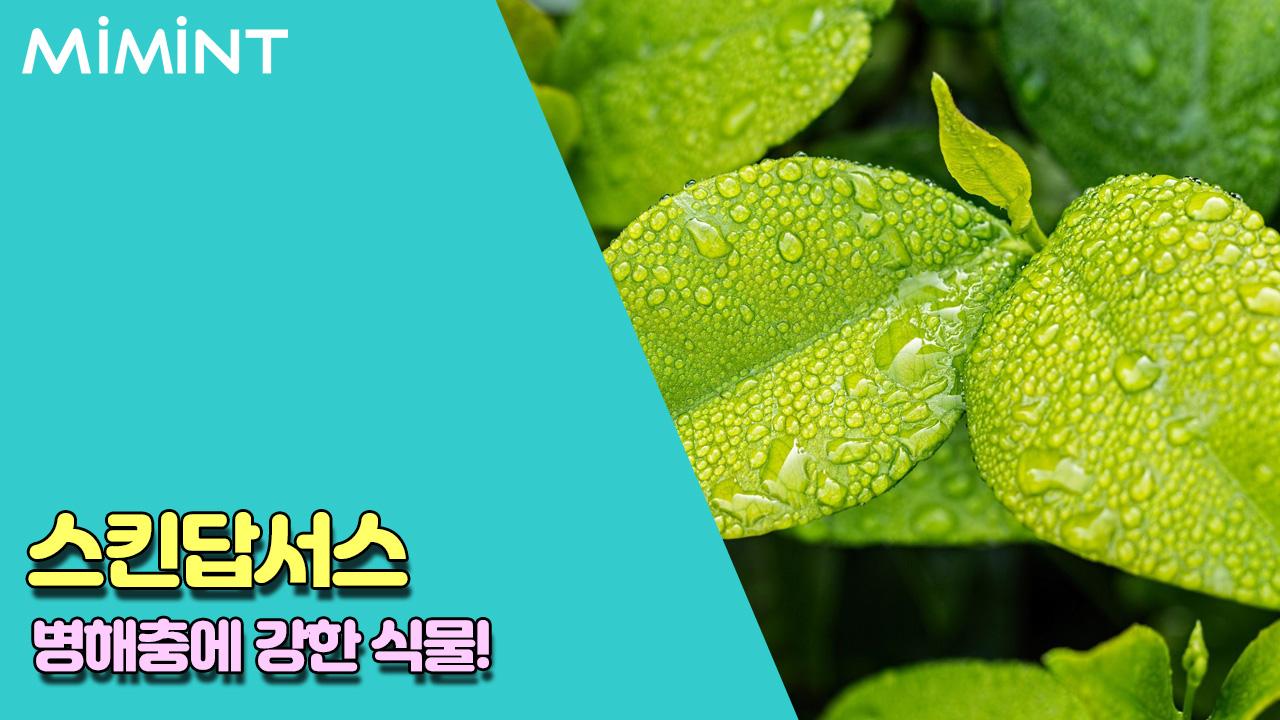 식물 2.jpg