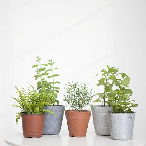 최고의 공기 청정 식물 BEST 3