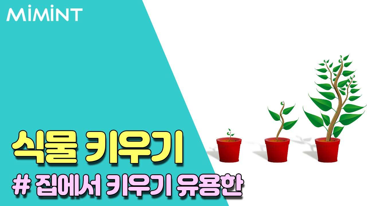 집에서 키우기 쉽고 유용한 식물 3가지!