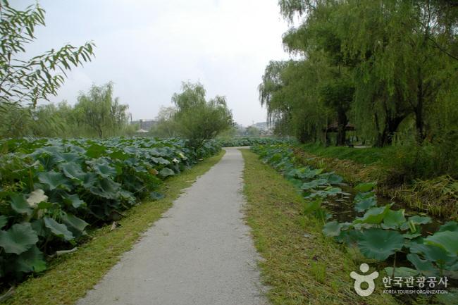 서동공원과 궁남지4.jpg
