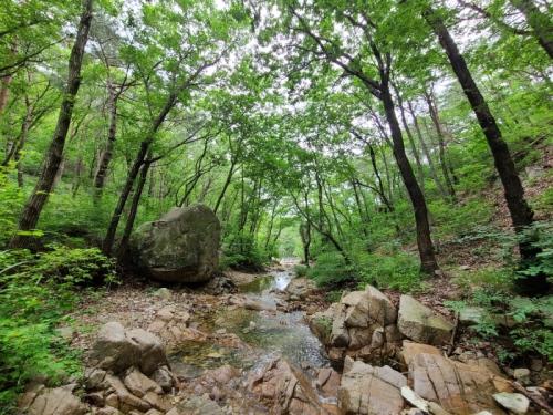 치유의 숲2.jpg