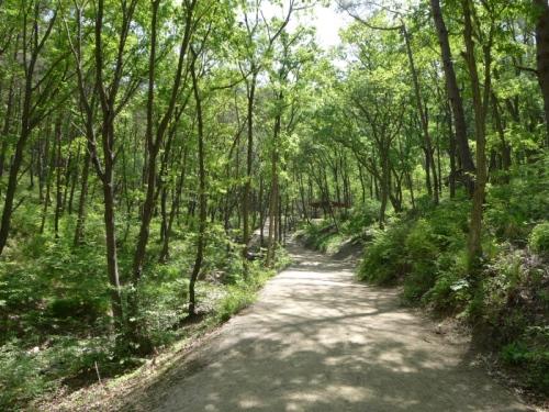 치유의 숲3.jpg
