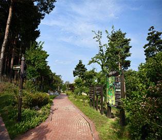 속초 숲박물관