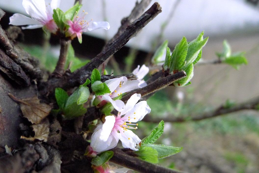 나무에 새순과 꽃잎