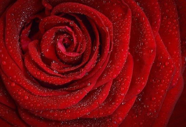 장미는 아름답다. 그러나 가시가 있다
