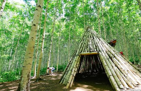 원대리 자작나무 숲 (속삭이는 자작나무 숲)